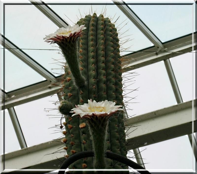 Les cactus for Jardin botanique ramadan 2015